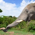hazyview-elephant-sanctuary-4