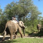 hazyview-elephant-sanctuary-9